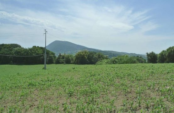 Farm with 11 hectares Parco del Conero