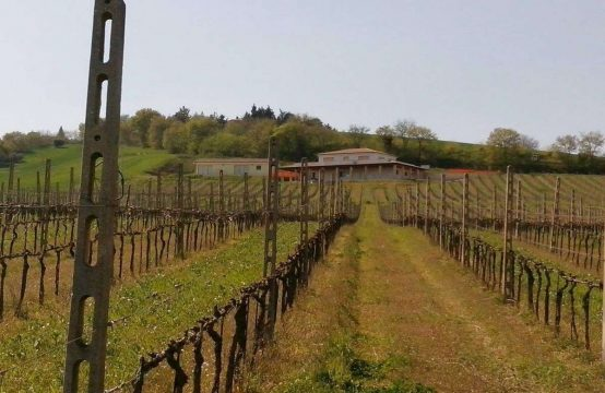 Prestigious winery for sale in Le Marche