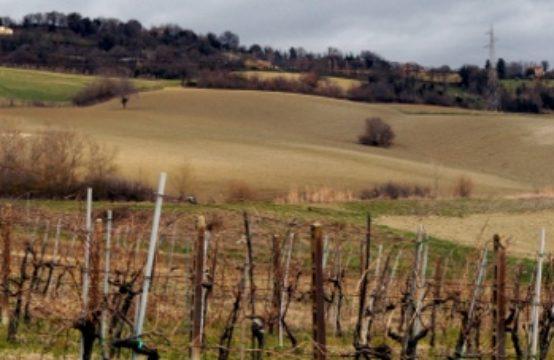 Azienda agricola in vendita in provincia di Ancona