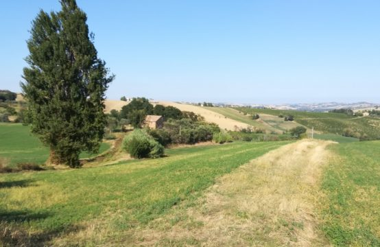 Farmhouse to be restored for sale near Arcevia