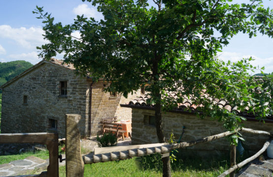 XIV Century farmhouse with 4 apartments